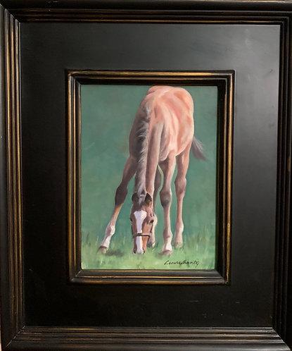 """""""Hugo, Grazing"""" 8 x 6 oil on linen, framed."""