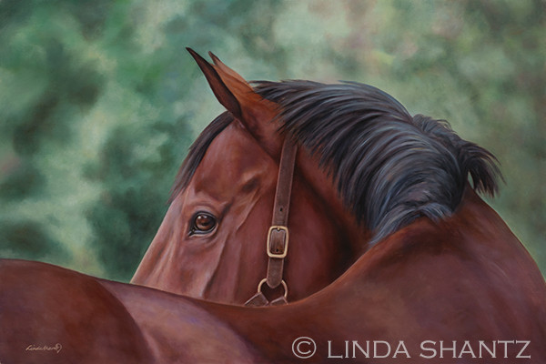 """Legendary,"" 24 x 36 oil on linen painting of a bay horse."