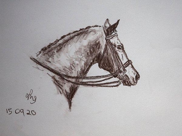 Dressage Pony Left-handed Sketch