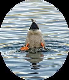 duck_butt.png