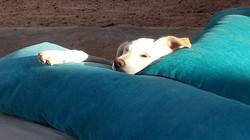 Gizeh wordt er moe van _-)
