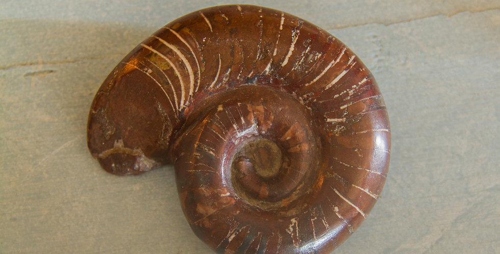 Small Red Ammonite Fossil