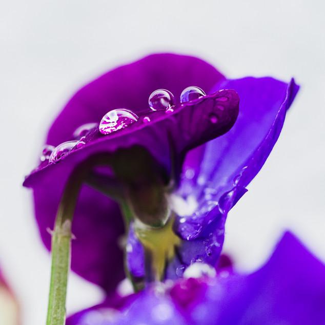 Gemma Duck Wildlife Botanical Macro Photographer