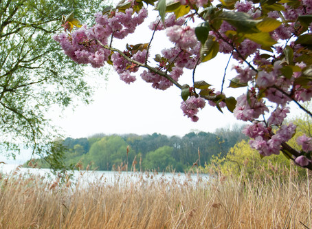 Postcards From . . . Chew Valley Lake