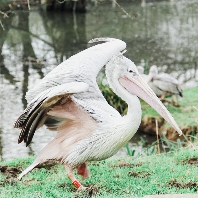 Gemma Duck Wildlife Photography
