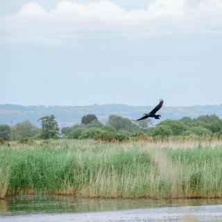 Gemma Duck Wildlife Photographer