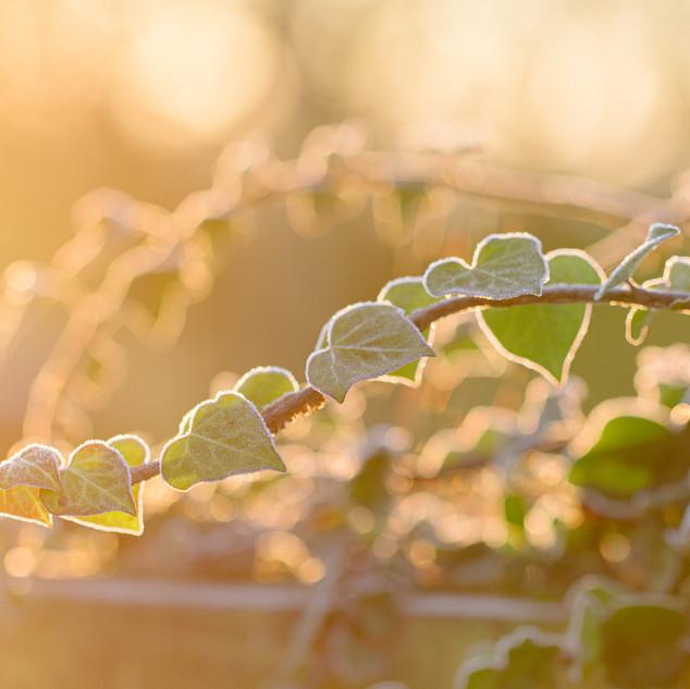 Gemma Duck Nature Somerset Photographer