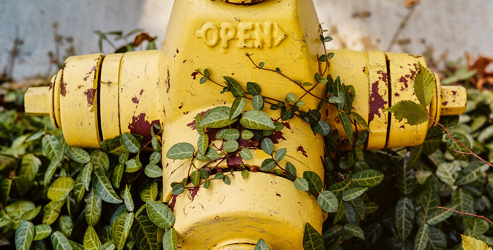 Yellow Fire Hydrant and green vines