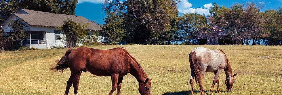 Texas Quarter Horses #2