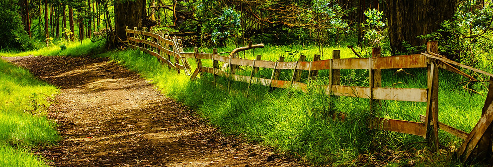 Hidden road and tired old fence