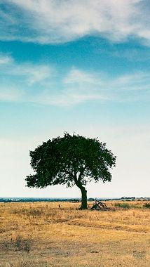 Landscape Photography.jpg