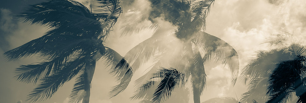 Black and White photography of palm trees blowing in the wind