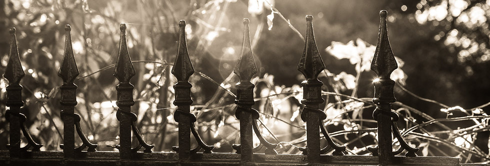 Black and white photography  | Wrought Iron gate |