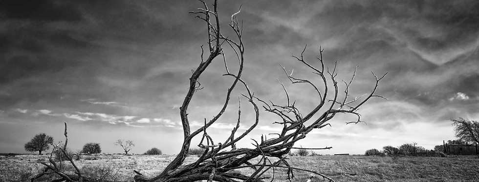 Fallen tree on the Texas prairie with storm clouds rolling in