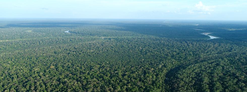 capa do site - IDARIS MAPIÁ AMAZONIA
