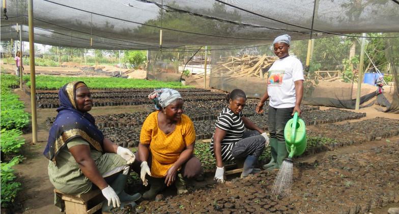 Sowing seeds in the tree nursery at Akumadan