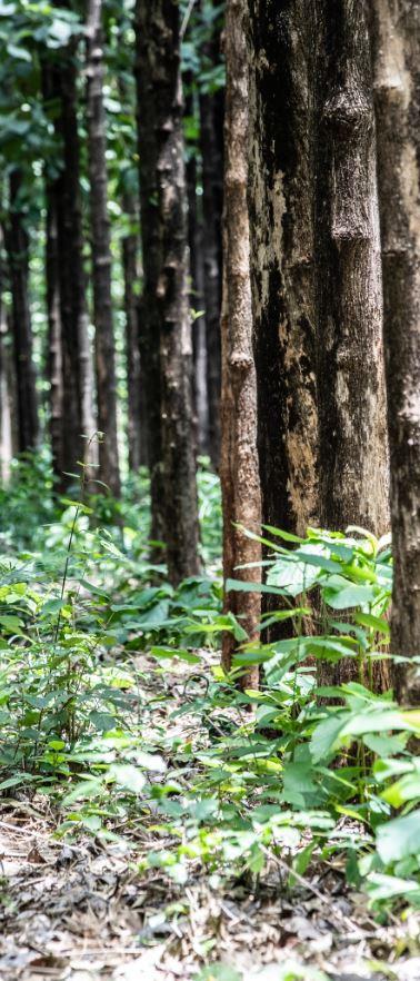 Commercial plantations