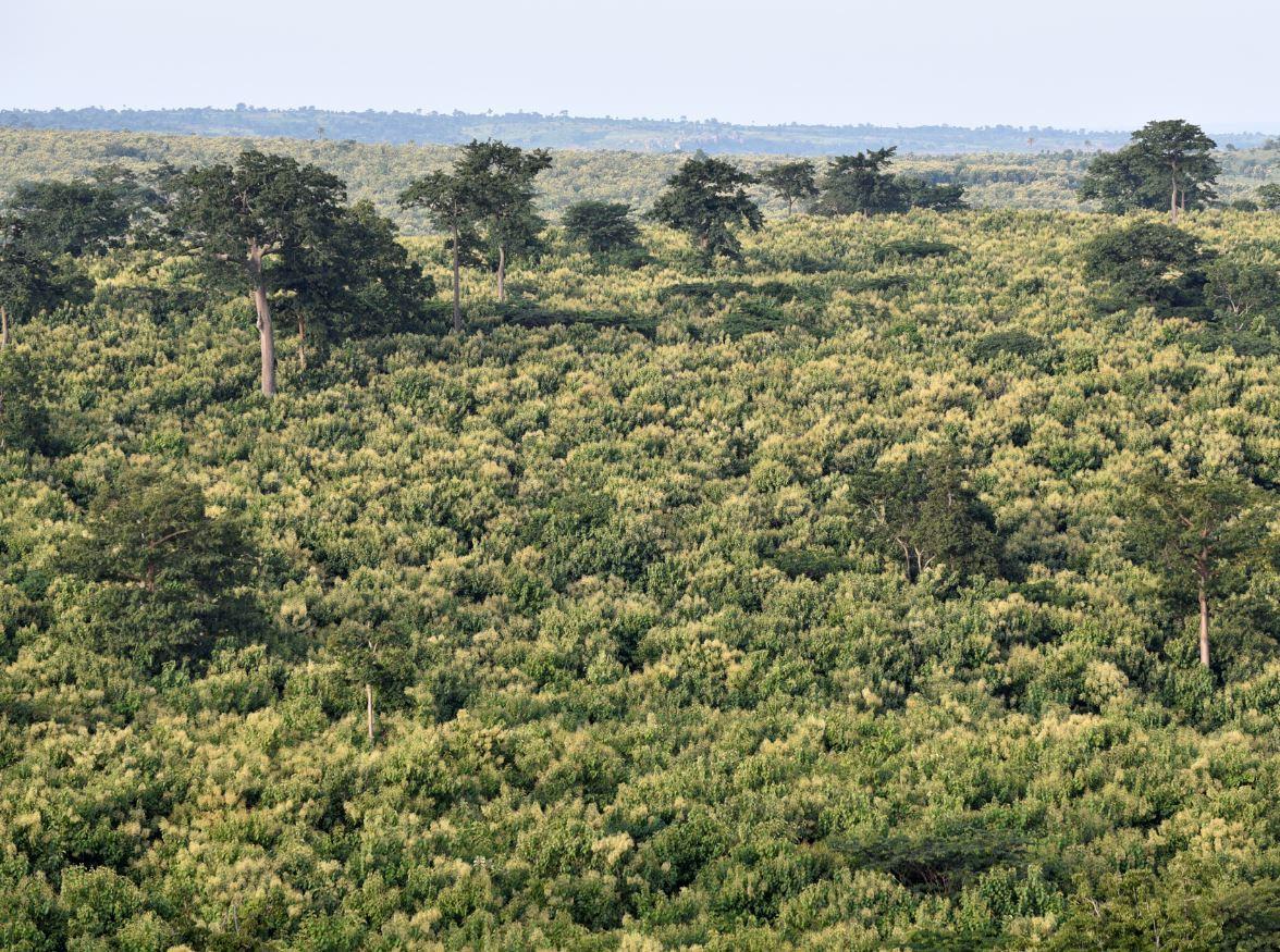 Overview plantations Akumadan
