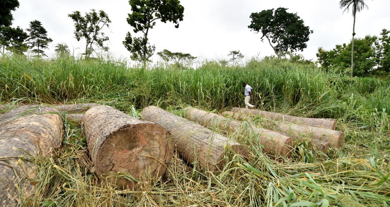 Illegal logging in Forest Reserve Tain II