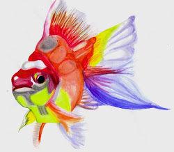 fishforblog.jpg