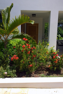Red Ixora-Shower of Gold-Sago Palm