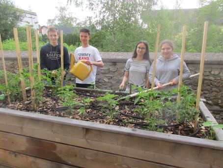WMMS erweitert den Mini-Schulgarten