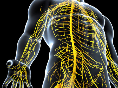 Massage and the Nervous & Endocrine Systems