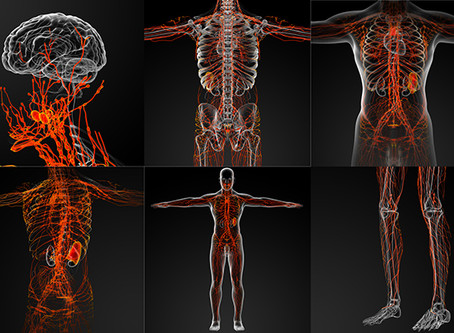 Massage and the Lymphatic & Immune Systems