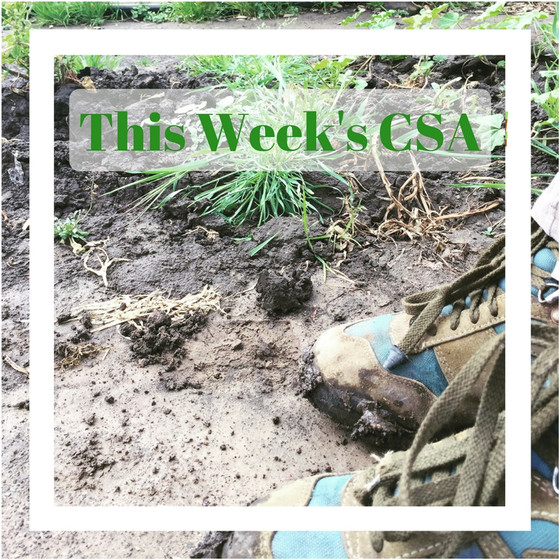 Your CSA contents for March 22nd