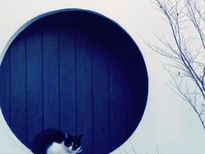 愛猫、20歳で永眠・・・。不思議な出来事。