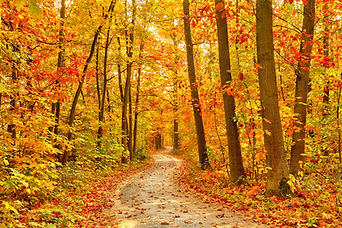 Pathway through the autumn forest.jpg
