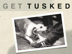 Get Tusked Book