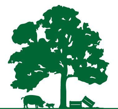 Tree and Pig.JPG