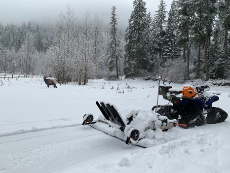 Groomer's Report - Tuesday, 12/1/20
