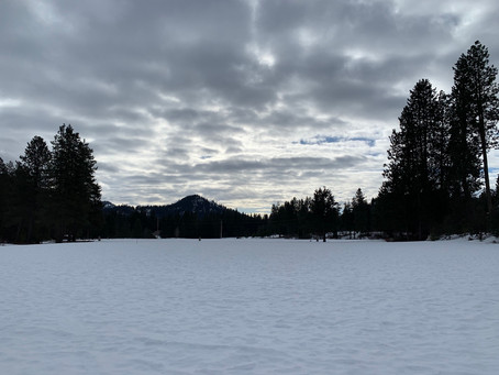 Groomer's Report - Tuesday 2/9/21