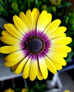 flower 2 plain.jpg
