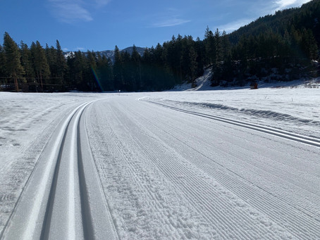 Groomer's Report - Tuesday 3/9/21
