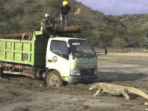 """Un projet """"Jurassic Park"""" en Indonésie suscite l'émoi chez les militants écologistes"""