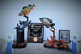 show fish photo.jpg