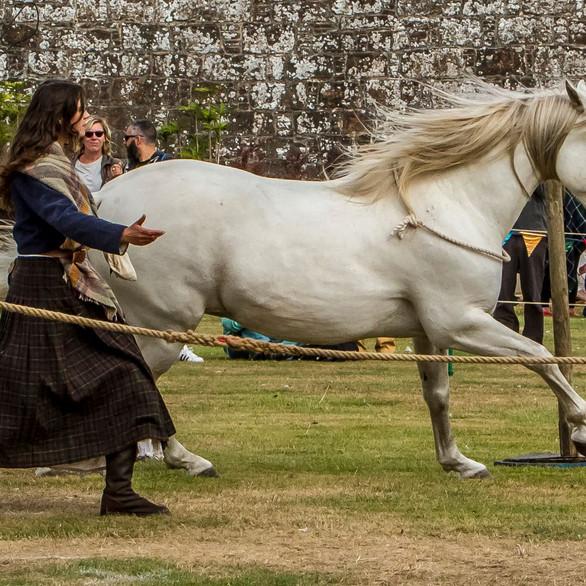 Liberty horse!
