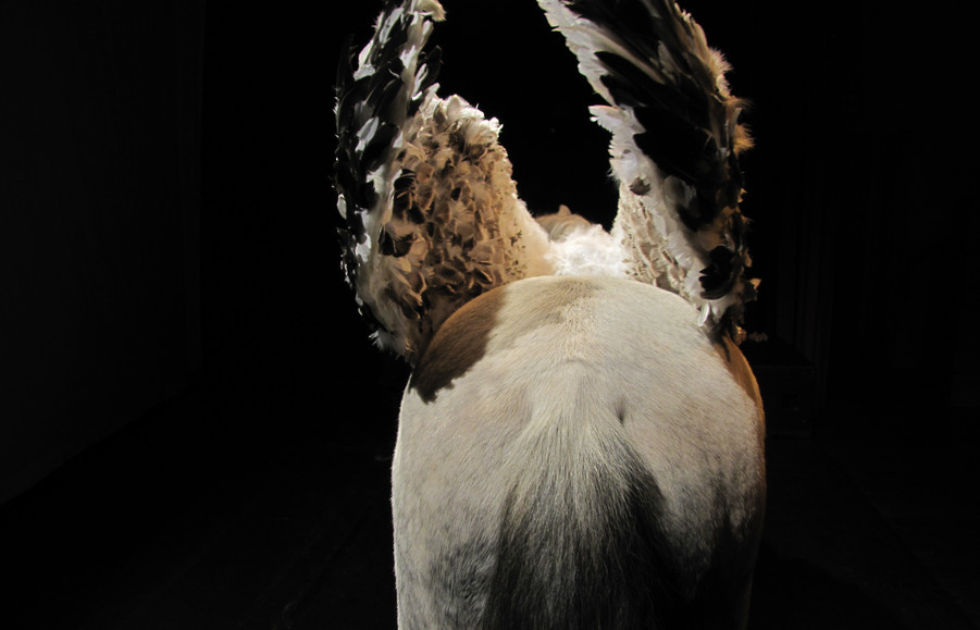 Pluto wings 071.JPG