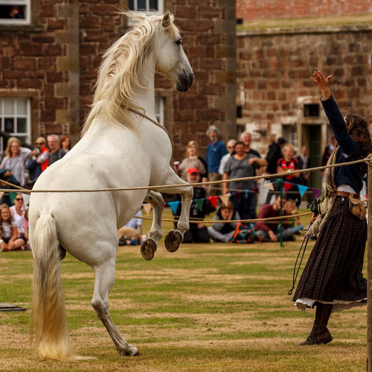 """The """"white witch"""" and her horse!"""