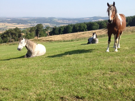 Horses chill out