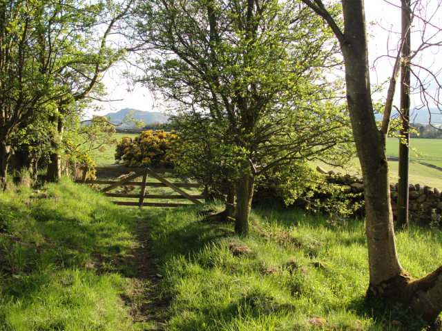 High summer down the lane