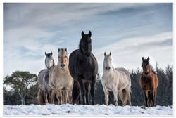 The horses of Lanton Hill