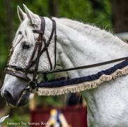 medieval reins