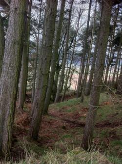 Lanton Hill woods