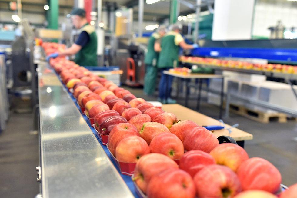 2_Food-industry.jpg