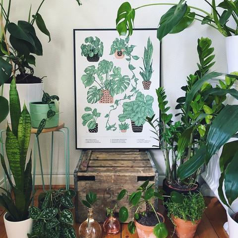 Favourite Plants poster