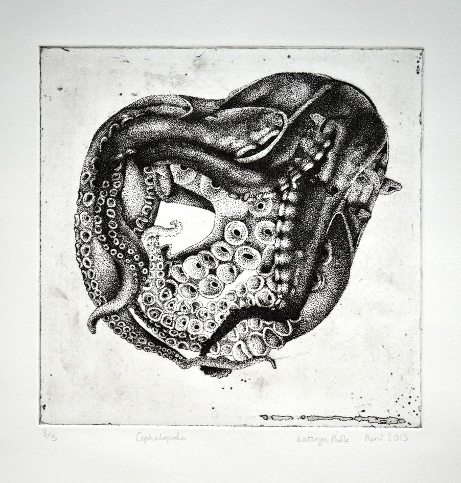 Cephalopod, photopolymer print, 2013